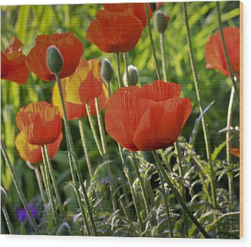 Wood Print featuring the photograph Poppy Flower by Nick Mares