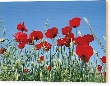 Wood Print featuring the photograph Poppy Flowers by George Atsametakis