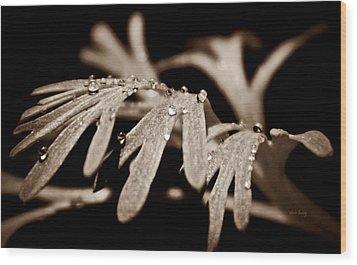 Poppy Foliage Wood Print by Chris Berry