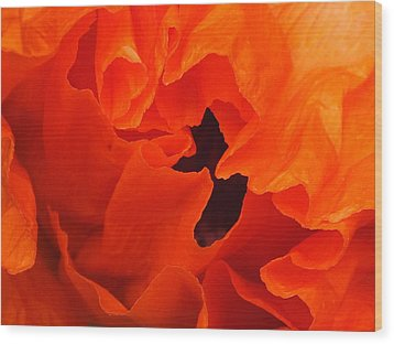Wood Print featuring the photograph Poppy by Gene Cyr