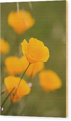Wood Print featuring the photograph Poppy I by Ronda Kimbrow