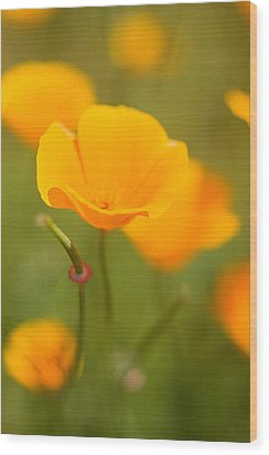 Wood Print featuring the photograph Poppy II by Ronda Kimbrow