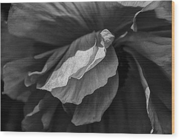 Poppy In Black And White May 2011 Wood Print by Joseph Duba