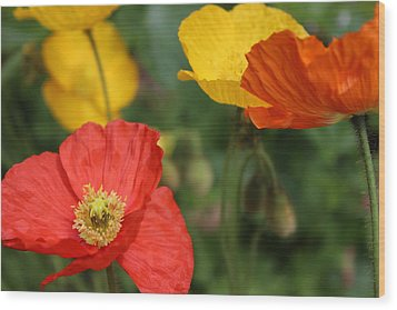 Poppy Iv Wood Print by Tiffany Erdman