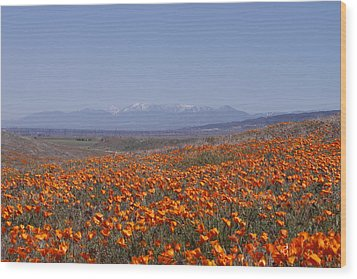 Poppy Land Wood Print by Ivete Basso Photography