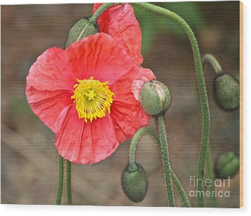 Poppy Power Wood Print by Eve Spring