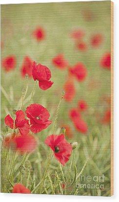 Poppy Red Wood Print by Anne Gilbert