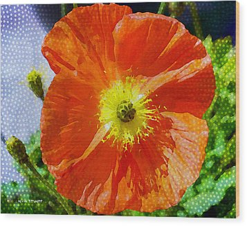 Poppy Series - Opened To The Sun Wood Print by Moon Stumpp