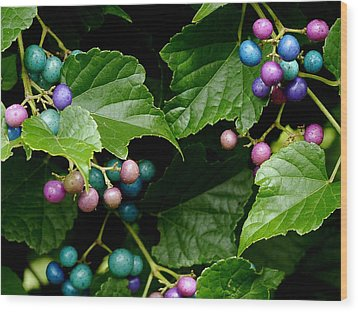 Porcelain Berries Wood Print by Lisa Phillips