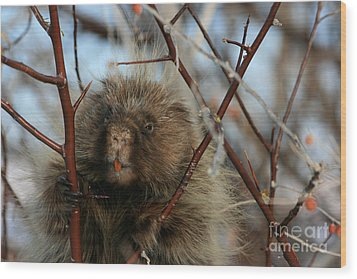 Porcupine And Berries Wood Print by Marty Fancy