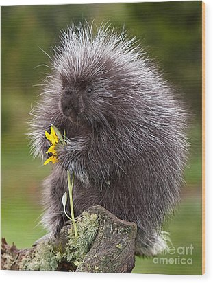 Porcupine With Arrowleaf Balsamroot Wood Print by Jerry Fornarotto