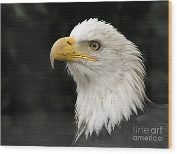 Wood Print featuring the photograph Portrait Of A Bald Eagle by Inge Riis McDonald
