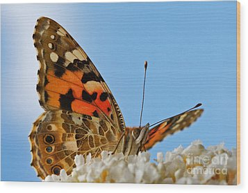 Portrait Of A Butterfly Wood Print