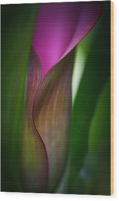 Wood Print featuring the photograph Portrait Of A Calla Lily by Zoe Ferrie