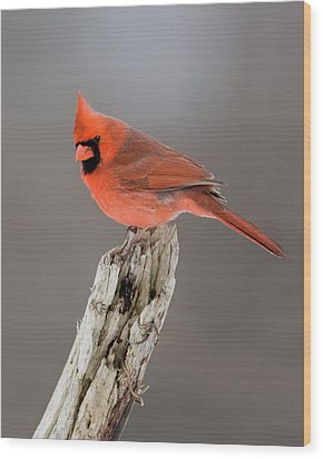 Portrait Of A Cardinal Wood Print