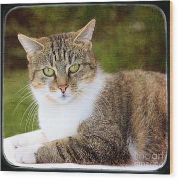 Portrait Of A Cat Wood Print by Angela Bruno
