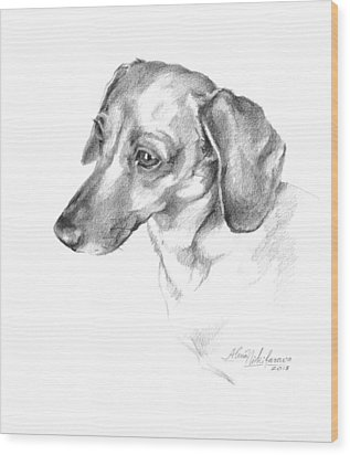Portrait Of A Dachshund Paying Attention Wood Print