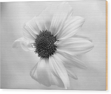 Wood Print featuring the photograph Portrait Of A Daisy by Louise Kumpf