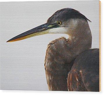 Portrait Of A Great Blue Heron - # 19 Wood Print by Paulette Thomas