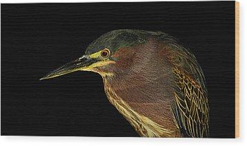 Portrait Of A Green Heron Wood Print