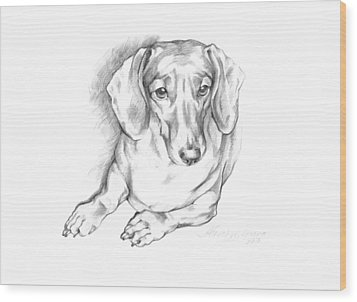 Portrait Of A Laying Dachshund Wood Print