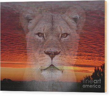 Portrait Of A Lioness At The End Of A Day Wood Print