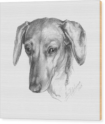 Portrait Of A Mini Dachshund  Wood Print
