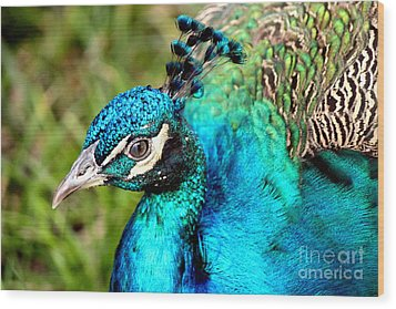 Wood Print featuring the photograph Portrait Of A Peacock by Kathy  White