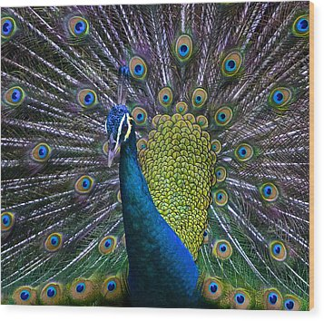 Portrait Of A Peacock Wood Print by Venetia Featherstone-Witty