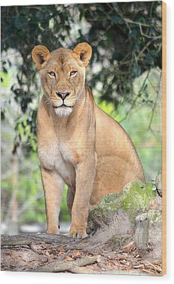 Portrait Of A Proud Lioness Wood Print