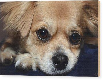 Portrait Of A Pup Wood Print by Lisa Knechtel