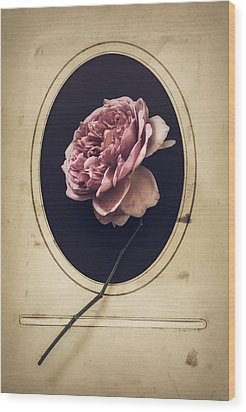 Wood Print featuring the photograph Portrait Of A Rose by Amy Weiss