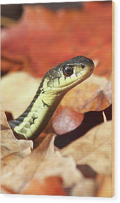 Wood Print featuring the photograph Portrait Of A Snake by Doris Potter