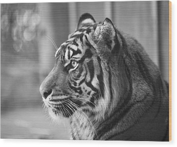 Portrait Of A Sumatran Tiger Wood Print by Gary Neiss