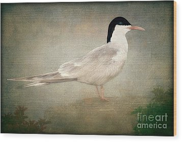 Portrait Of A Tern Wood Print by Tom York Images