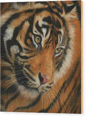 Portrait Of A Tiger Wood Print by David Stribbling