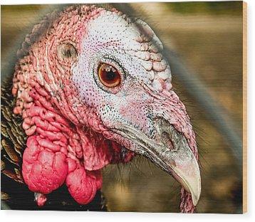 Portrait Of A Turkey Wood Print by Jim DeLillo