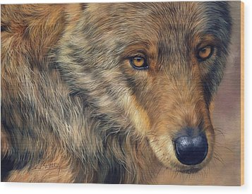 Portrait Of A Wolf Wood Print by David Stribbling