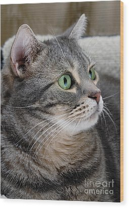 Portrait Of An Ameriican Shorthair Cat Wood Print by Amy Cicconi