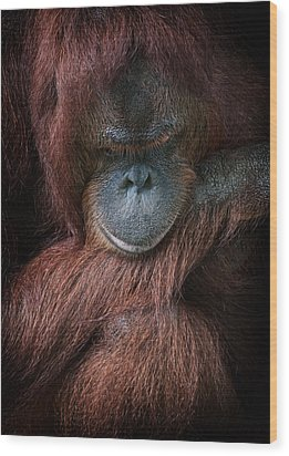 Wood Print featuring the photograph Portrait Of An Orangutan by Zoe Ferrie