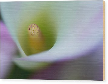 Wood Print featuring the photograph Portrait Of The Stamen Of A Calla Lily by Zoe Ferrie