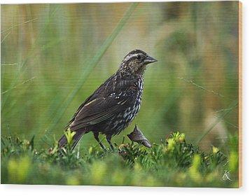 Posing Bird Wood Print