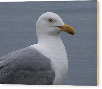 Wood Print featuring the photograph Posing Gull by Gene Cyr