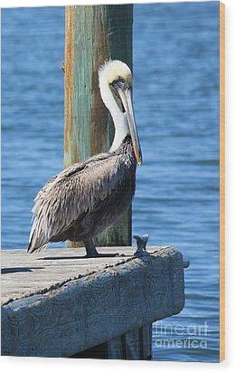 Posing Pelican Wood Print by Carol Groenen