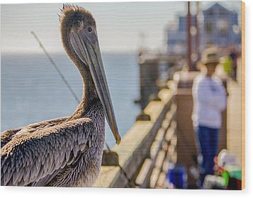 Posing Pelican Wood Print by Robert  Aycock