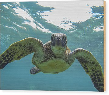 Posing Sea Turtle Wood Print by Brad Scott
