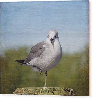 Posing Seagull Wood Print by Kim Hojnacki