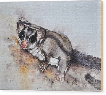 Possum Cute Sugar Glider Wood Print by Sandra Phryce-Jones