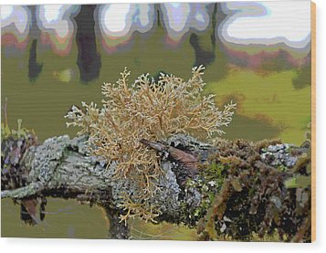 Posterized Antler Lichen Wood Print by Cathy Mahnke