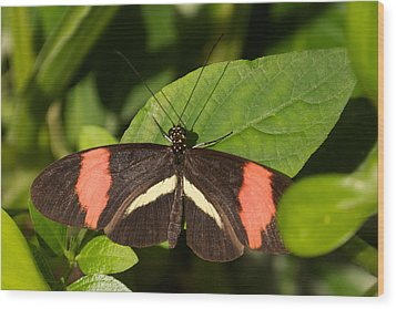 Wood Print featuring the photograph Postman Butterfly by Sandy Molinaro